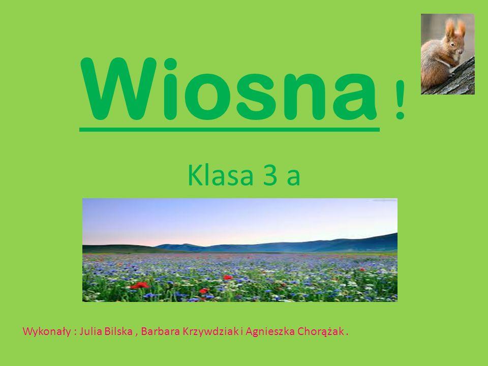 Wiosna ! Klasa 3 a Wykonały : Julia Bilska, Barbara Krzywdziak i Agnieszka Chorążak.