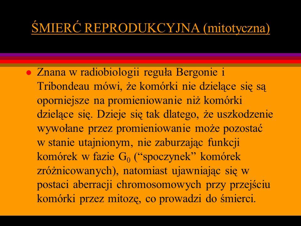 ŚMIERĆ REPRODUKCYJNA (mitotyczna) l Znana w radiobiologii reguła Bergonie i Tribondeau mówi, że komórki nie dzielące się są oporniejsze na promieniowa