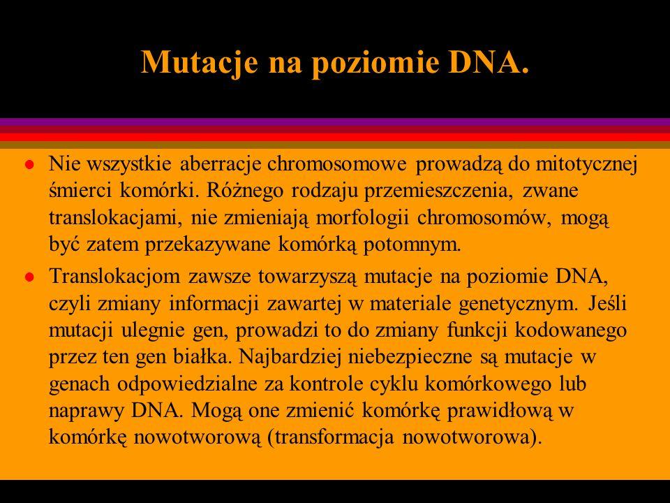 Mutacje na poziomie DNA. l Nie wszystkie aberracje chromosomowe prowadzą do mitotycznej śmierci komórki. Różnego rodzaju przemieszczenia, zwane transl