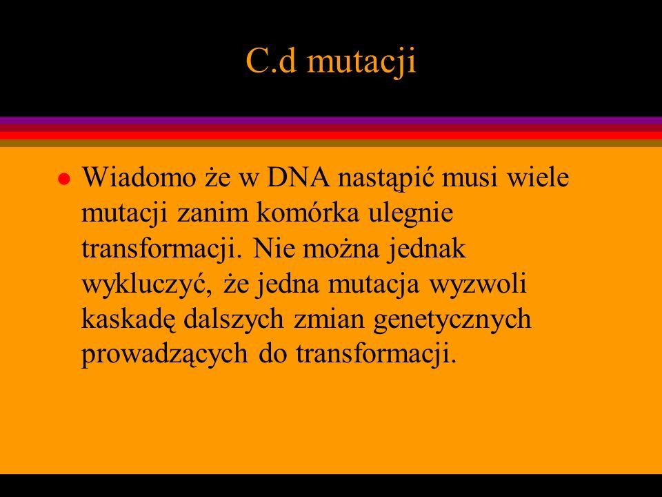 C.d mutacji Wiadomo że w DNA nastąpić musi wiele mutacji zanim komórka ulegnie transformacji. Nie można jednak wykluczyć, że jedna mutacja wyzwoli kas