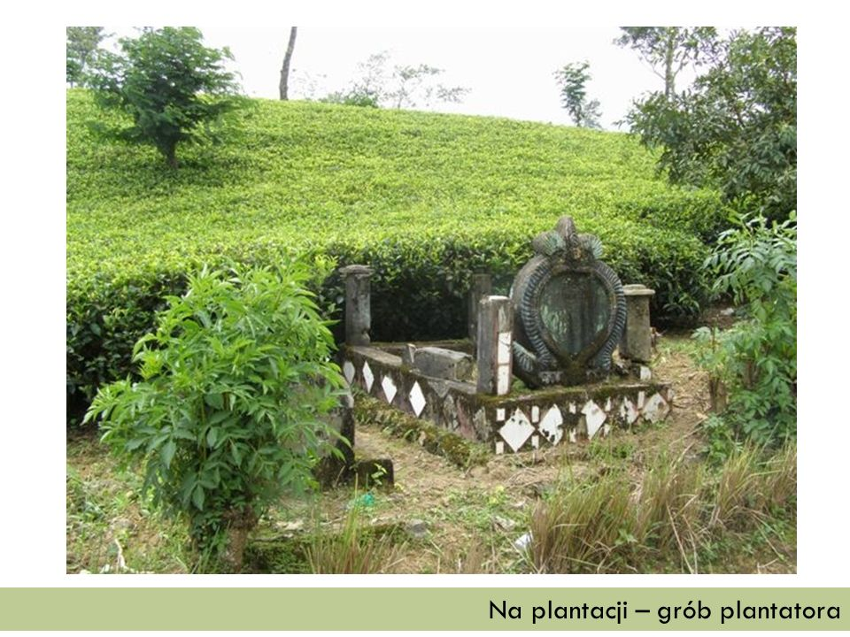 Na plantacji – grób plantatora