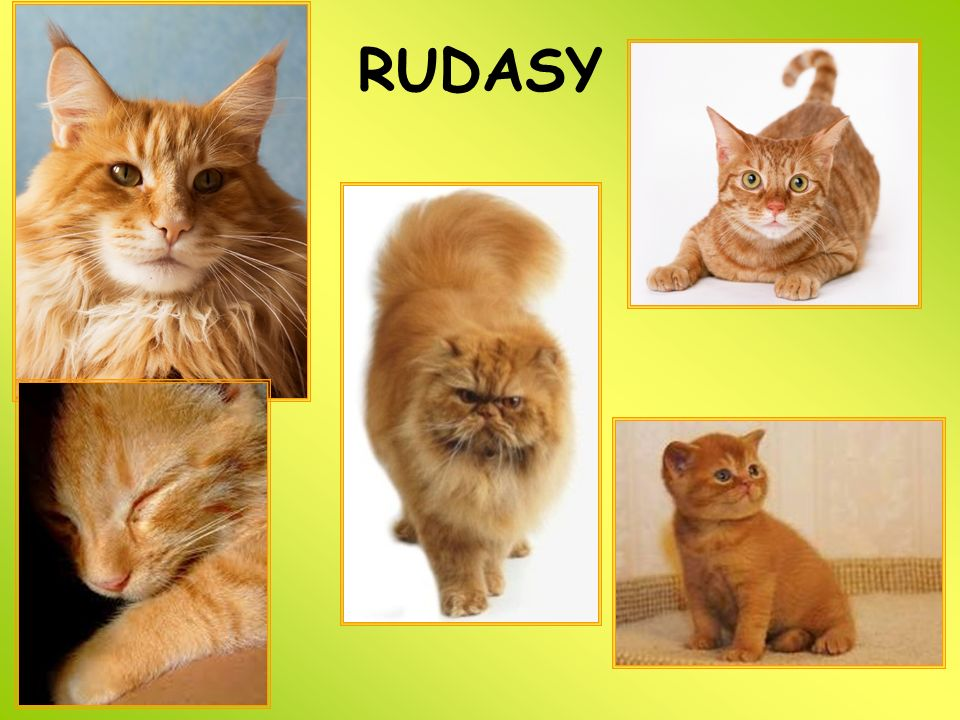 RUDASY