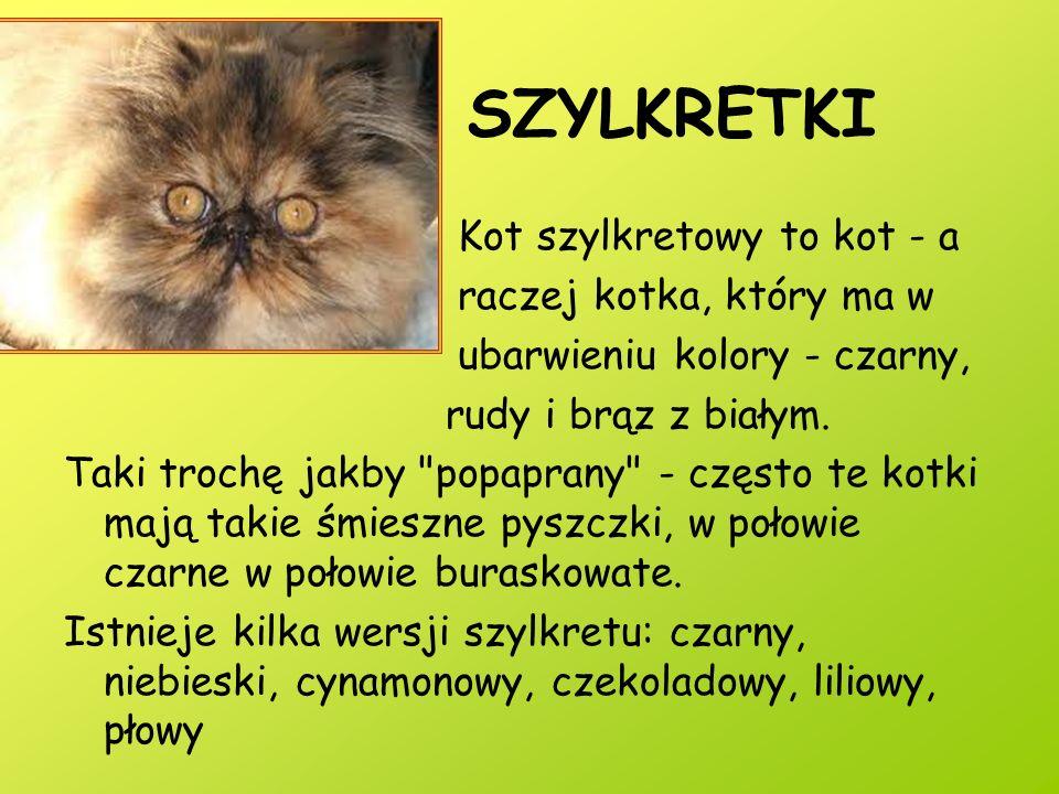 SZYLKRETKI Kot szylkretowy to kot - a raczej kotka, który ma w ubarwieniu kolory - czarny, rudy i brąz z białym. Taki trochę jakby