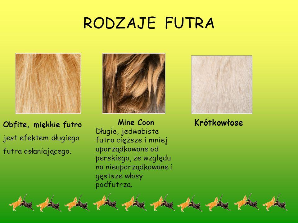 RODZAJE FUTRA Sfinks Widocznie bezwłosy, posiada cienka powłokę dolnych włosów podfutrza na niektórych obszarach ciała.