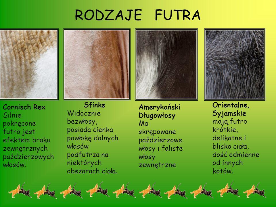 RODZAJE KOCICH SYLWETEK Istnieją trzy zasadnicze typy budowy sylwetek u kotów: krępa – krótkie, masywne łapy, szerokie barki i zady, spłaszczony pyszczek i okrągła spłaszczona głowa; muskularna – łapy średniej długości, średnio szerokie barki i zady, wydłużony pyszczek i lekko okrągła głowa; smukła – długie, smukłe łapy, wąskie barki i zady, wąska głowa o klinowatym kształcie.