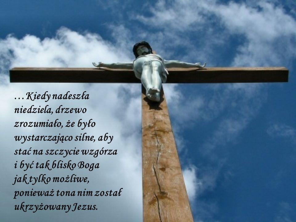 …Kiedy nadeszła niedziela, drzewo zrozumiało, że było wystarczająco silne, aby stać na szczycie wzgórza i być tak blisko Boga jak tylko możliwe, ponie