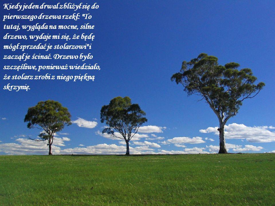 Kiedy jeden drwal zbliżył się do pierwszego drzewa rzekł: