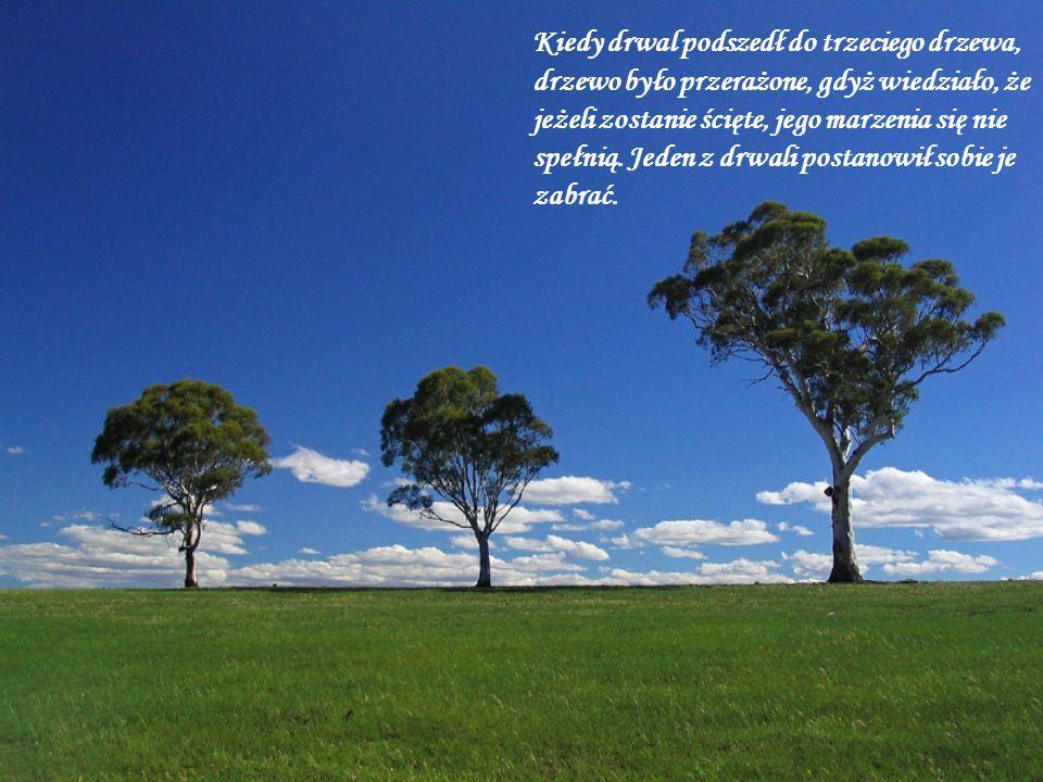 Kiedy drwal podszedł do trzeciego drzewa, drzewo było przerażone, gdyż wiedziało, że jeżeli zostanie ścięte, jego marzenia się nie spełnią. Jeden z dr