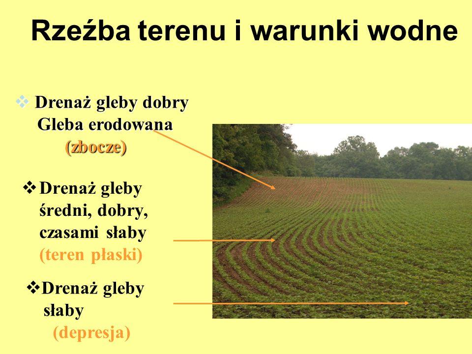 Rzeźba terenu i warunki wodne Drenaż gleby średni, dobry, czasami słaby (teren płaski) Drenaż gleby dobry Drenaż gleby dobry Gleba erodowana Gleba ero