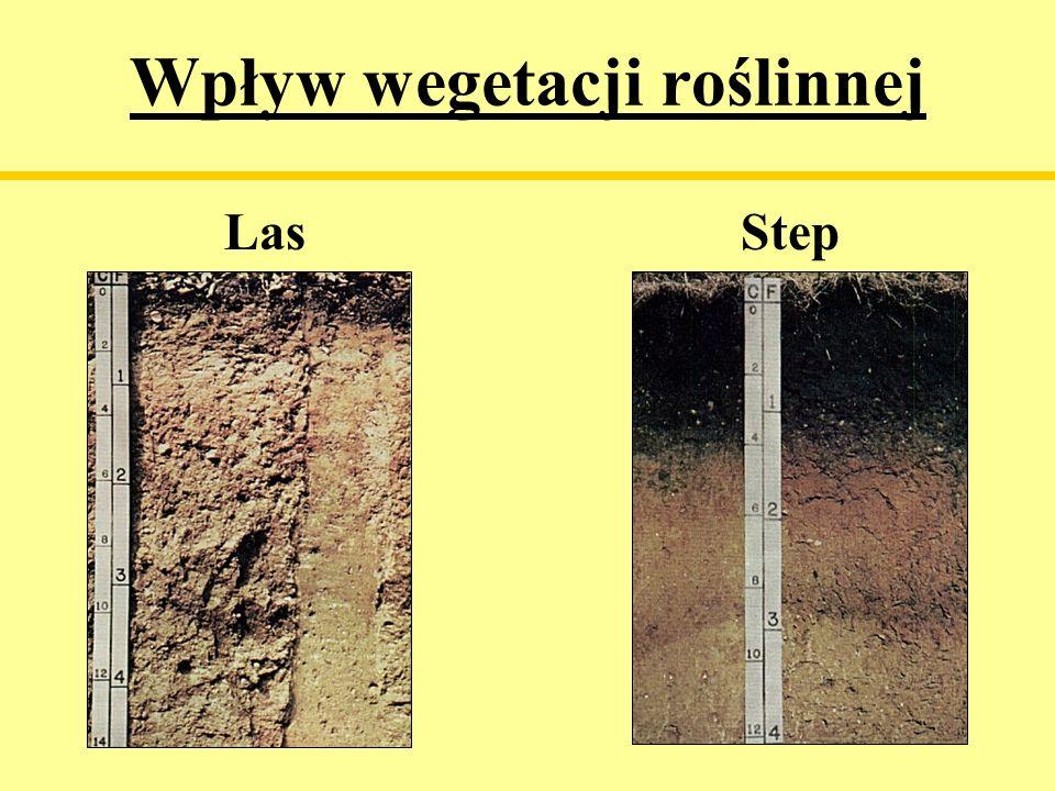 Wpływ wegetacji roślinnej Las Step