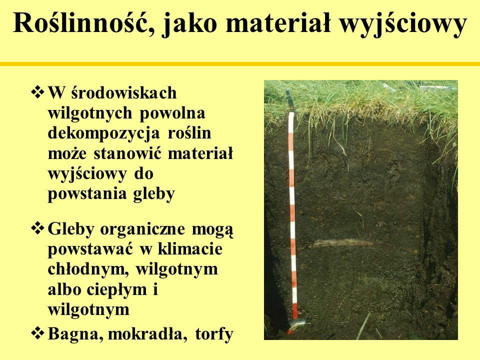 Roślinność, jako materiał wyjściowy W środowiskach wilgotnych powolna dekompozycja roślin może stanowić materiał wyjściowy do powstania gleby Gleby or