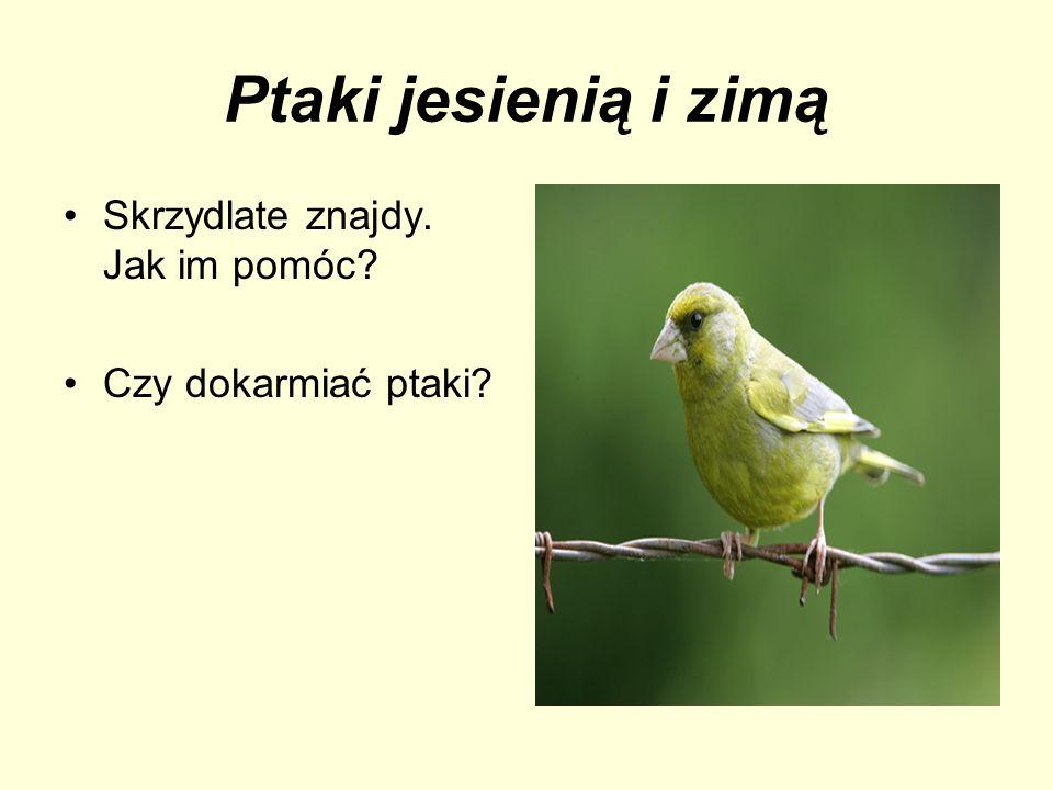 Ptaki jesienią i zimą Skrzydlate znajdy. Jak im pomóc? Czy dokarmiać ptaki?