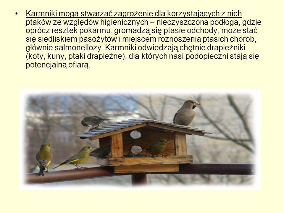 Karmniki mogą stwarzać zagrożenie dla korzystających z nich ptaków ze względów higienicznych – nieczyszczona podłoga, gdzie oprócz resztek pokarmu, gr