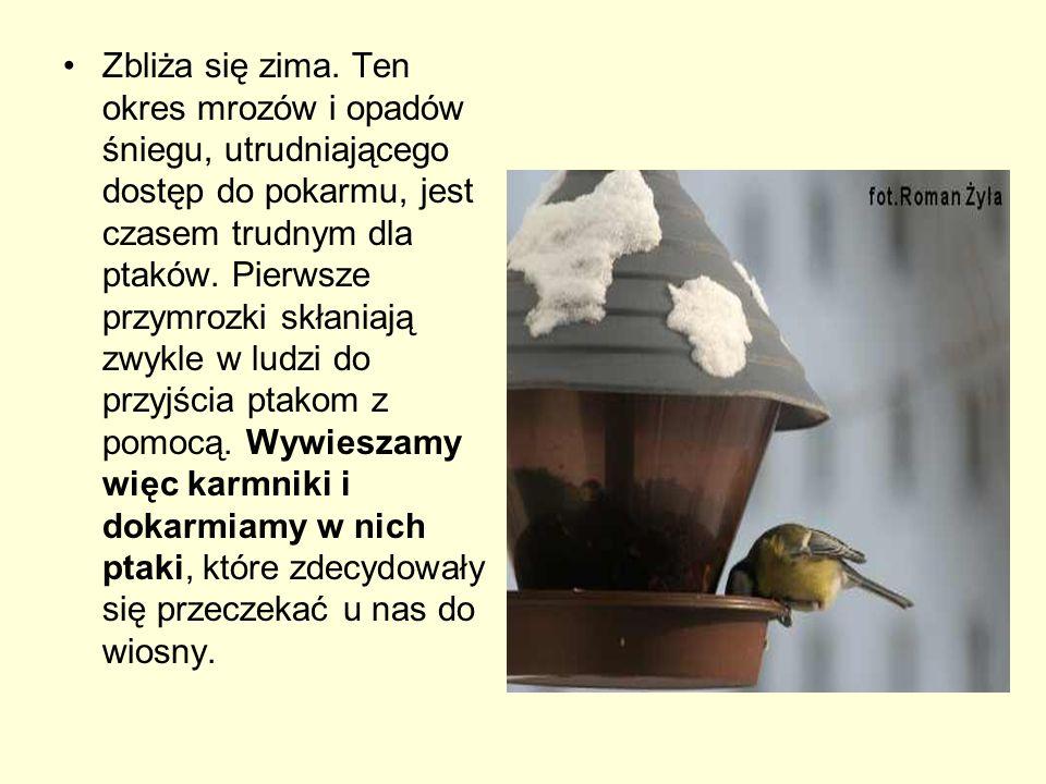 Wskazówki dla dokarmiających Czym dokarmiać ptaki.