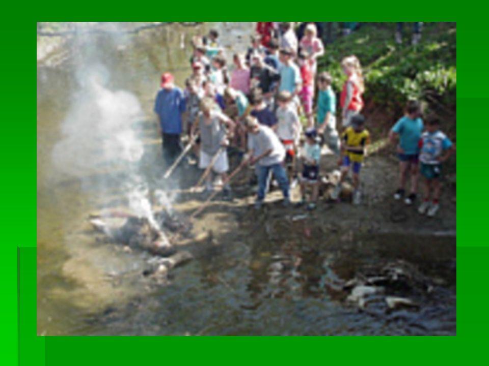 Wieszanie śledzia W widowiskowy W widowiskowy sposób przybijano sposób przybijano ryb ę do drzewa.