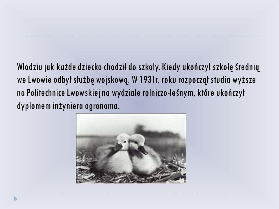 Włodziu jak każde dziecko chodził do szkoły. Kiedy ukończył szkołę średnią we Lwowie odbył służbę wojskową. W 1931r. roku rozpoczął studia wyższe na P