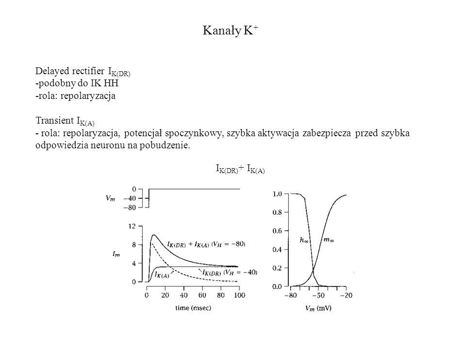 Kanały K + I K(DR) + I K(A) Delayed rectifier I K(DR) -podobny do IK HH -rola: repolaryzacja Transient I K(A) - rola: repolaryzacja, potencjał spoczyn