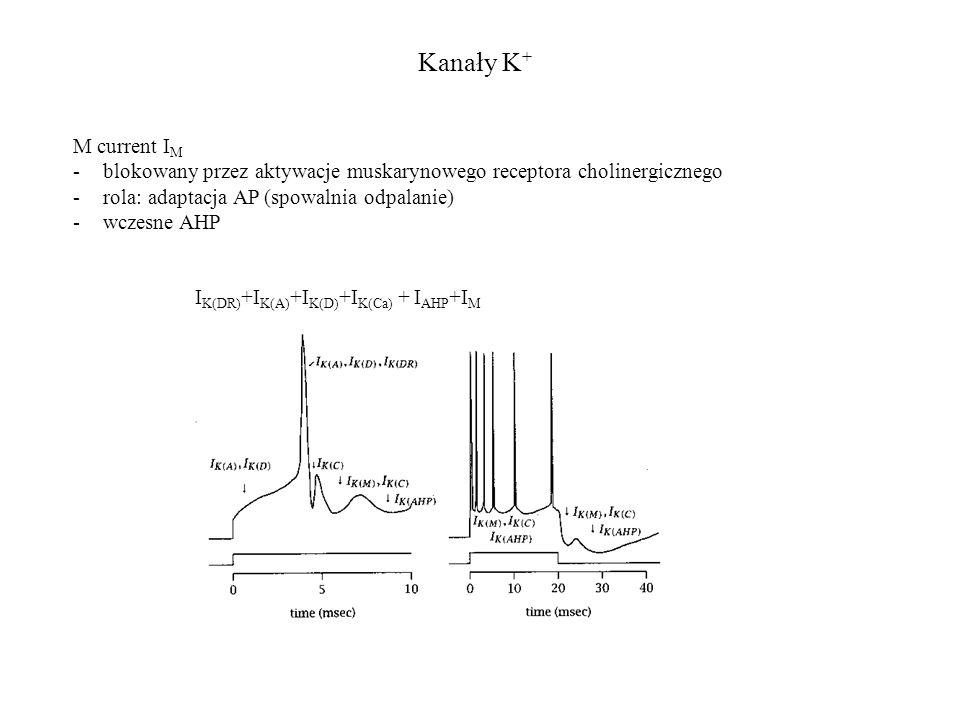 Kanały K + I K(DR) +I K(A) +I K(D) +I K(Ca) + I AHP +I M M current I M -blokowany przez aktywacje muskarynowego receptora cholinergicznego -rola: adap