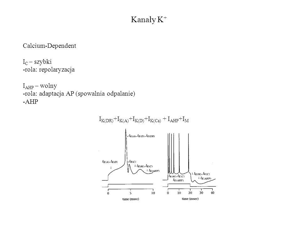 Kanały K + I K(DR) +I K(A) +I K(D) +I K(Ca) + I AHP +I M Calcium-Dependent I C – szybki -rola: repolaryzacja I AHP – wolny -rola: adaptacja AP (spowal
