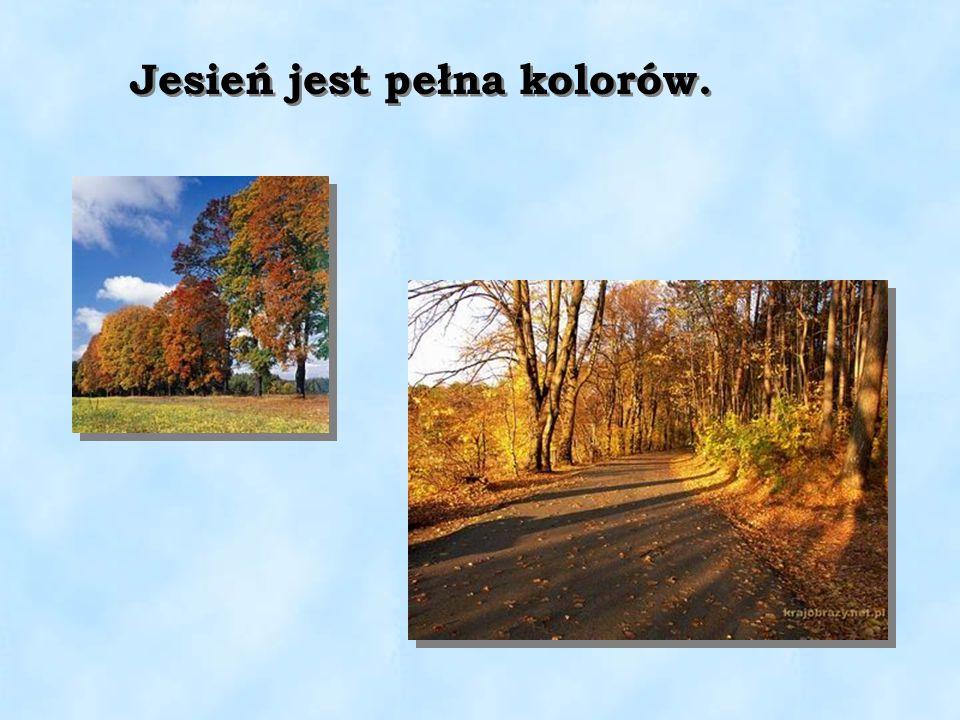 Jesień jest pełna kolorów.