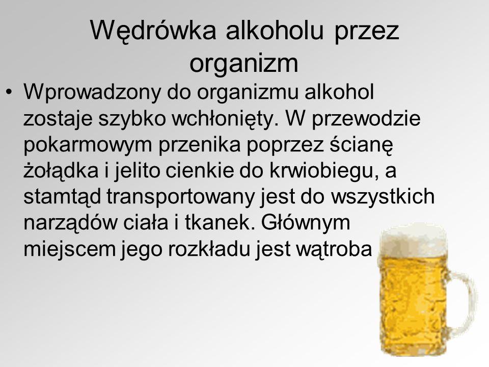 Walka organizmu z alkoholem Jako substancja toksyczna, stanowiąca poważne zagrożenie dla ustroju, musi zostać rozłożony i skutecznie unieszkodliwiony.