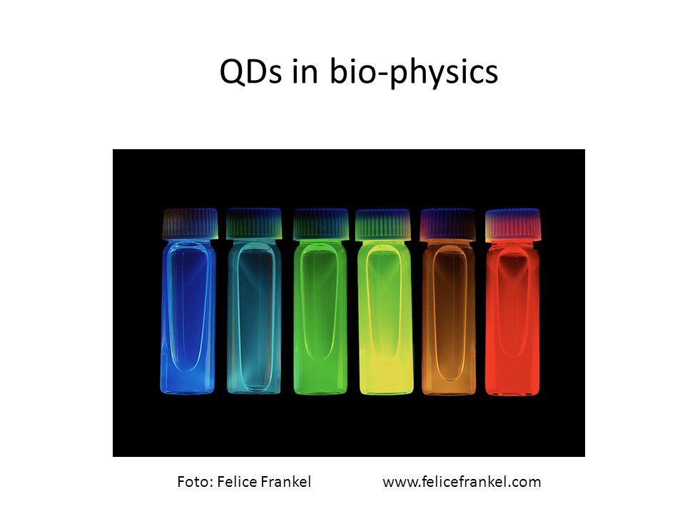 QDs in bio-physics Foto: Felice Frankelwww.felicefrankel.com