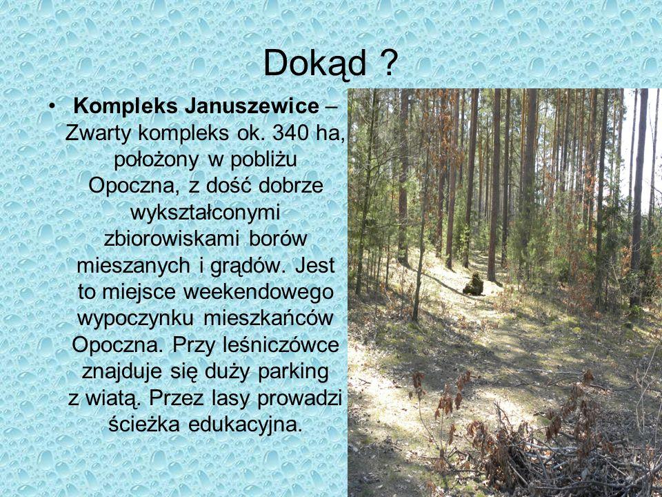 Dokąd ? Kompleks Januszewice – Zwarty kompleks ok. 340 ha, położony w pobliżu Opoczna, z dość dobrze wykształconymi zbiorowiskami borów mieszanych i g