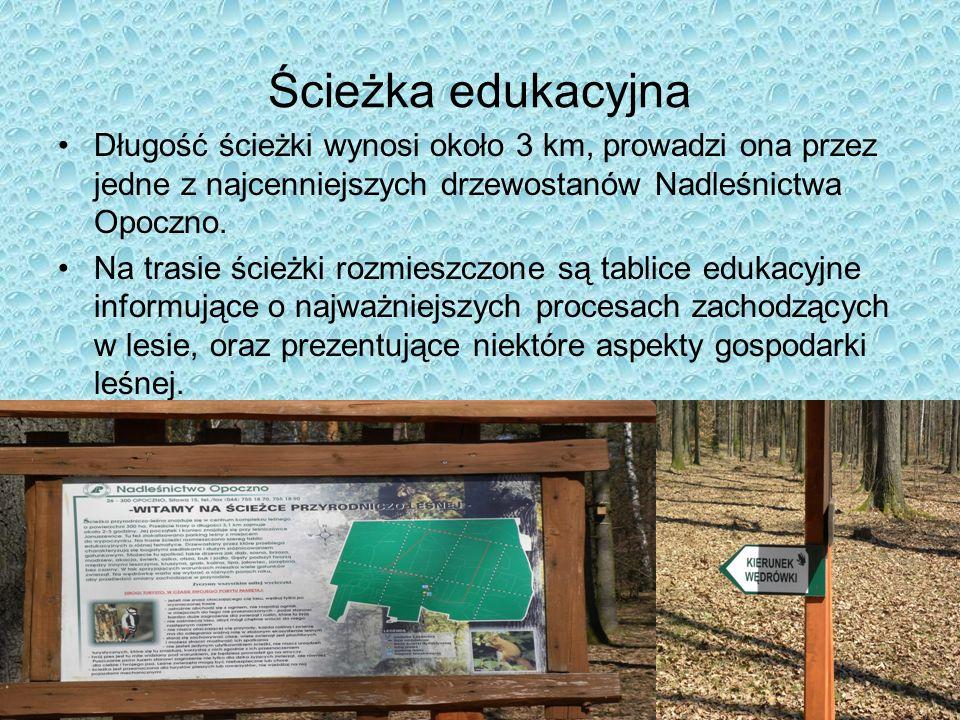 Ścieżka edukacyjna Długość ścieżki wynosi około 3 km, prowadzi ona przez jedne z najcenniejszych drzewostanów Nadleśnictwa Opoczno. Na trasie ścieżki