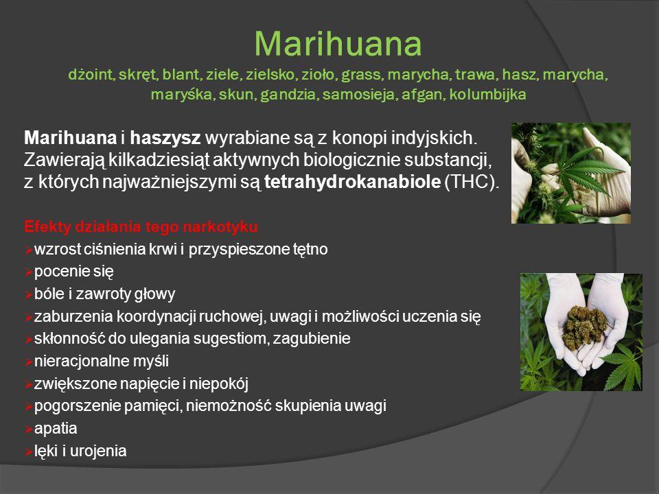 Marihuana dżoint, skręt, blant, ziele, zielsko, zioło, grass, marycha, trawa, hasz, marycha, maryśka, skun, gandzia, samosieja, afgan, kolumbijka Mari