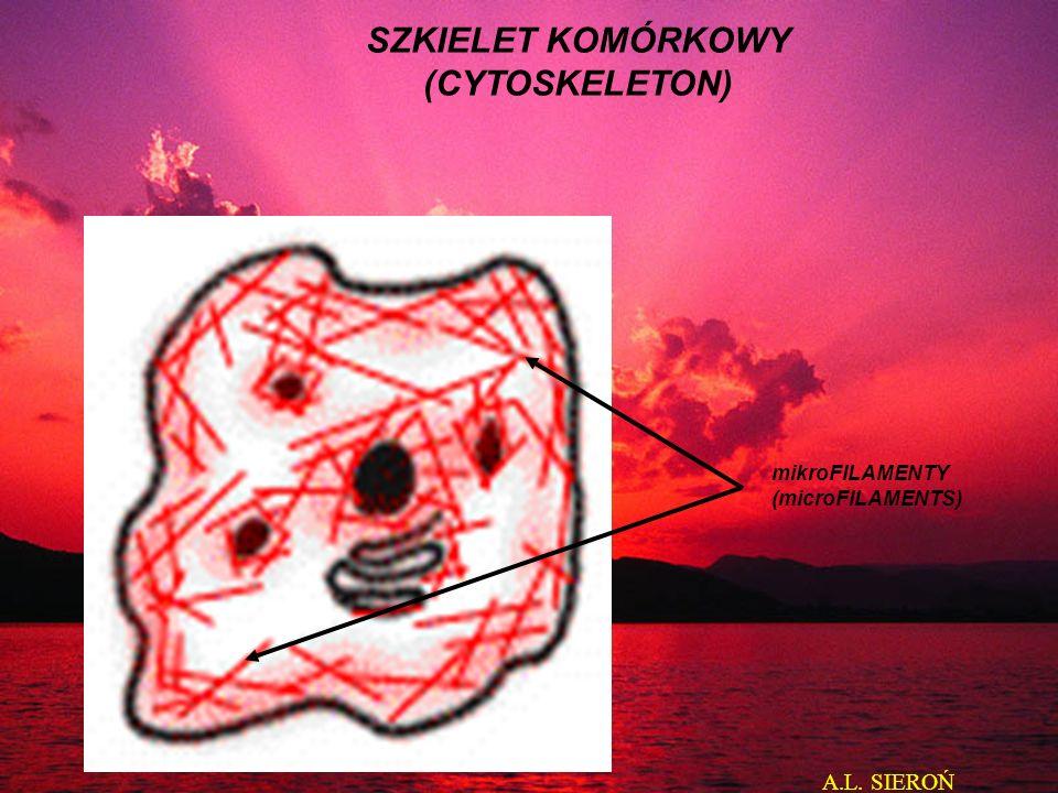 mikroFILAMENTY (microFILAMENTS) SZKIELET KOMÓRKOWY (CYTOSKELETON) A.L. SIEROŃ