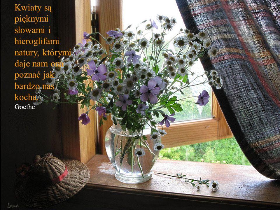 Kwiaty są pięknymi słowami i hieroglifami natury, którymi daje nam ona poznać jak bardzo nas kocha.