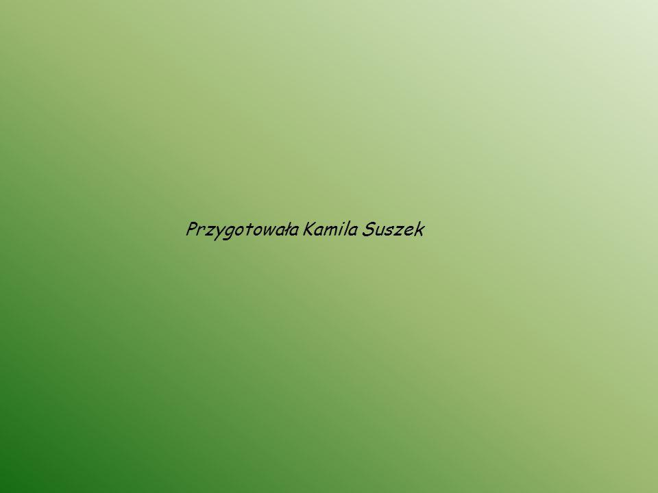 Przygotowała Kamila Suszek