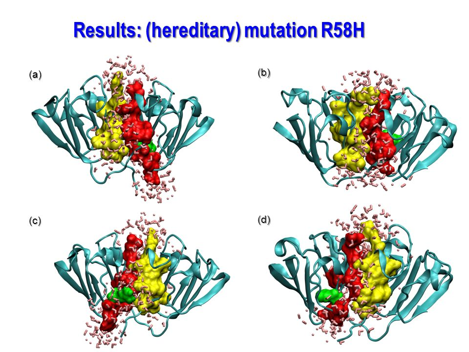 Results: (hereditary) mutation R58H (a) (b) (c) (d)