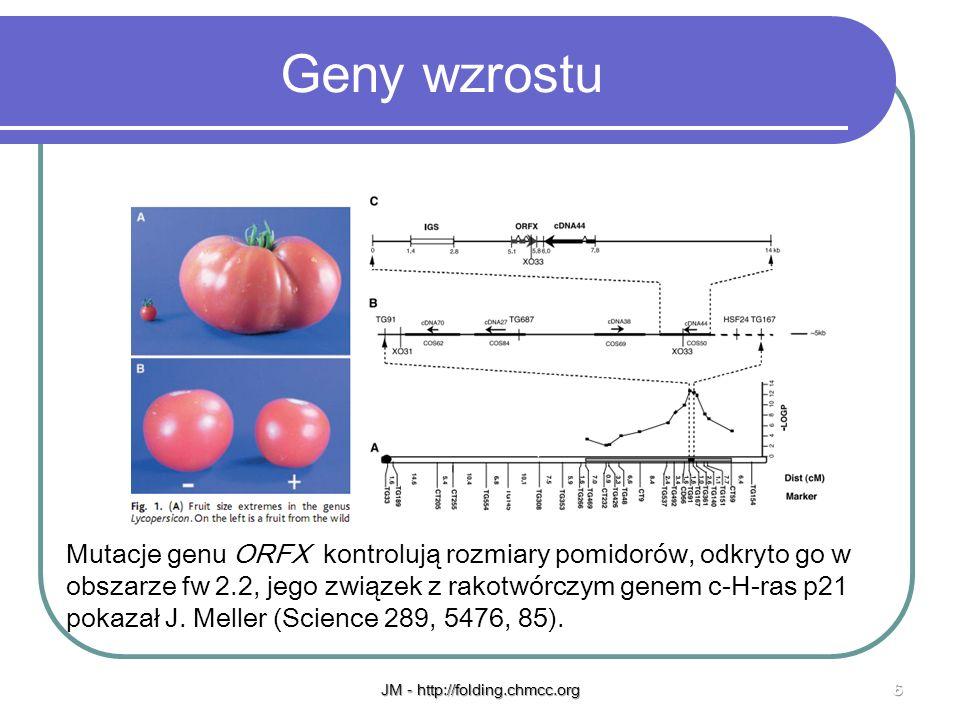 JM - http://folding.chmcc.org6 Geny wzrostu Mutacje genu ORFX kontrolują rozmiary pomidorów, odkryto go w obszarze fw 2.2, jego związek z rakotwórczym