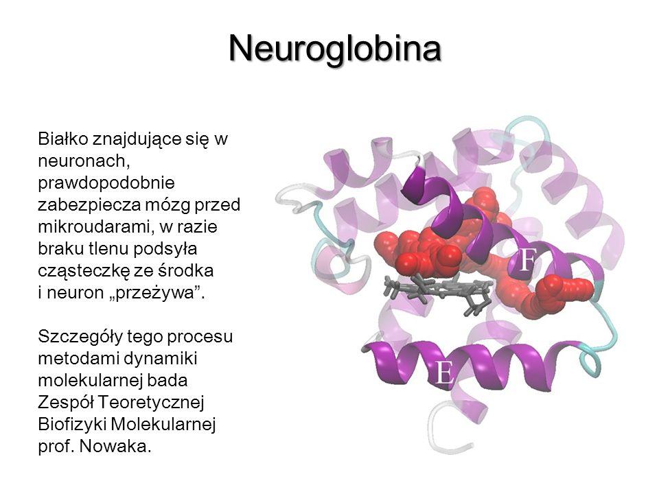 Neuroglobina Białko znajdujące się w neuronach, prawdopodobnie zabezpiecza mózg przed mikroudarami, w razie braku tlenu podsyła cząsteczkę ze środka i