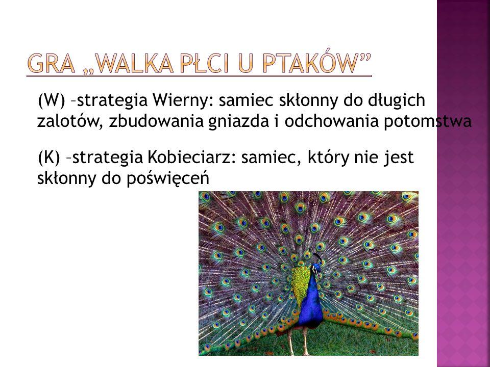 (W) –strategia Wierny: samiec skłonny do długich zalotów, zbudowania gniazda i odchowania potomstwa (K) –strategia Kobieciarz: samiec, który nie jest