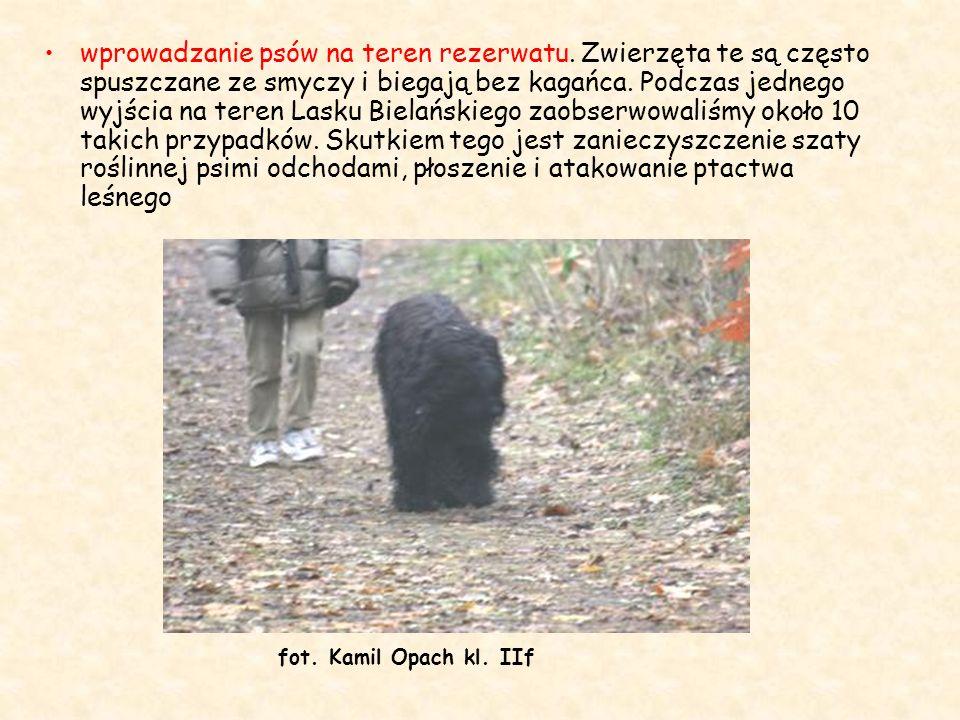 wprowadzanie psów na teren rezerwatu. Zwierzęta te są często spuszczane ze smyczy i biegają bez kagańca. Podczas jednego wyjścia na teren Lasku Bielań
