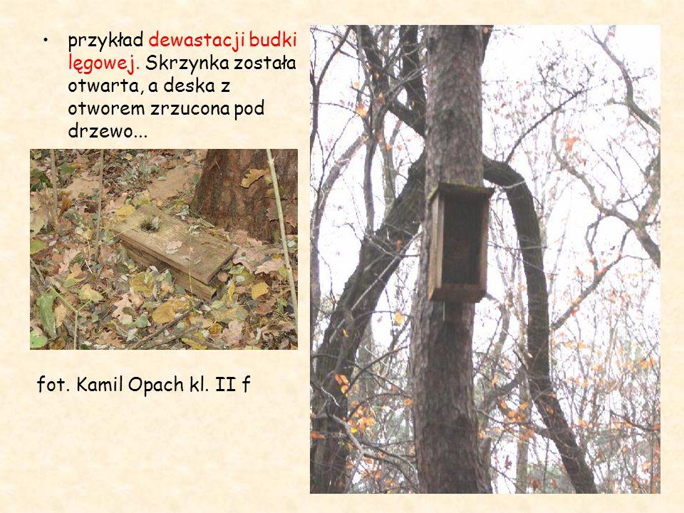 przykład dewastacji budki lęgowej. Skrzynka została otwarta, a deska z otworem zrzucona pod drzewo... fot. Kamil Opach kl. II f