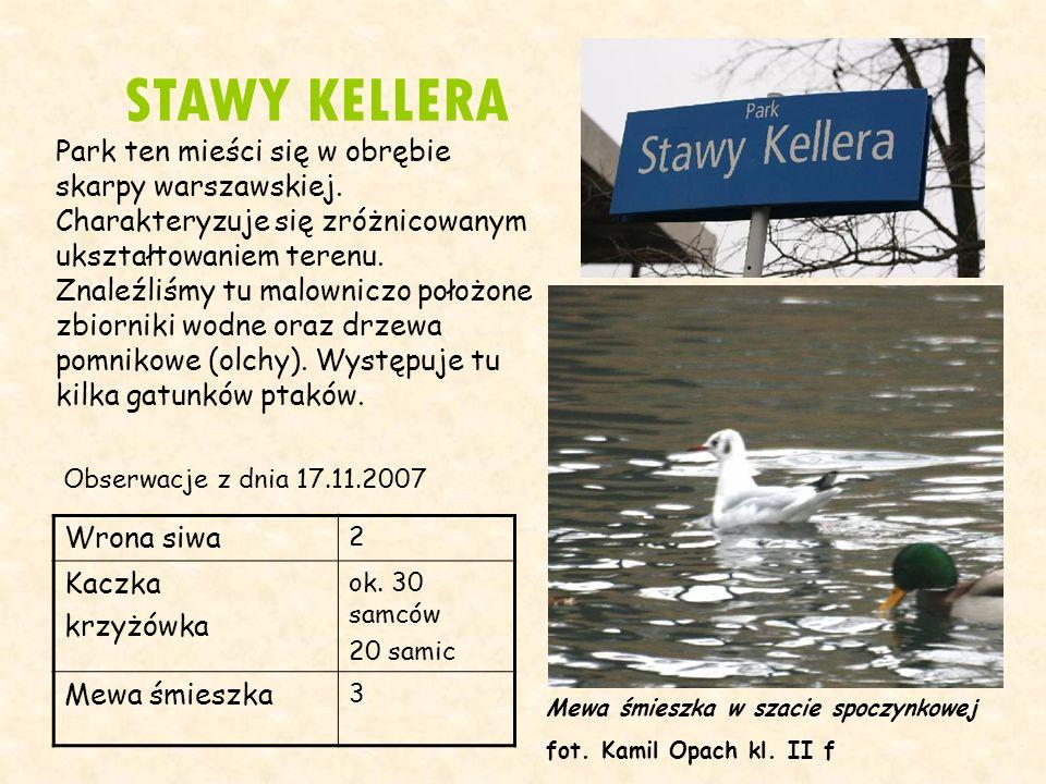 STAWY KELLERA Obserwacje z dnia 17.11.2007 Wrona siwa 2 Kaczka krzyżówka ok. 30 samców 20 samic Mewa śmieszka 3 Mewa śmieszka w szacie spoczynkowej fo