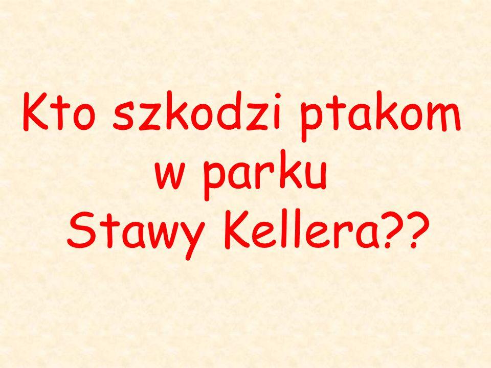 Kto szkodzi ptakom w parku Stawy Kellera??