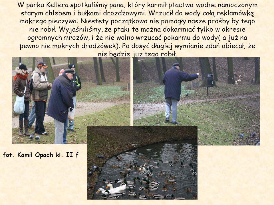 W parku Kellera spotkaliśmy pana, który karmił ptactwo wodne namoczonym starym chlebem i bułkami drożdżowymi. Wrzucił do wody całą reklamówkę mokrego
