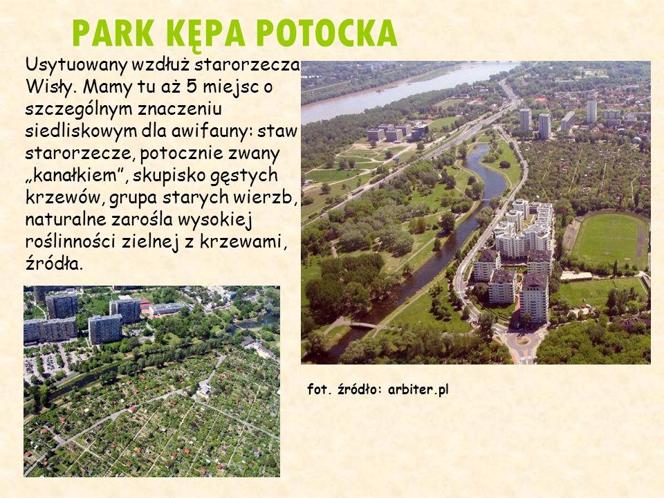 PARK KĘPA POTOCKA Usytuowany wzdłuż starorzecza Wisły. Mamy tu aż 5 miejsc o szczególnym znaczeniu siedliskowym dla awifauny: staw - starorzecze, poto
