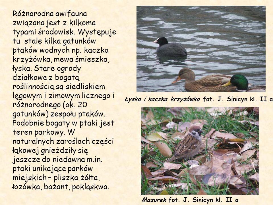 Różnorodna awifauna związana jest z kilkoma typami środowisk. Występuje tu stale kilka gatunków ptaków wodnych np. kaczka krzyżówka, mewa śmieszka, ły