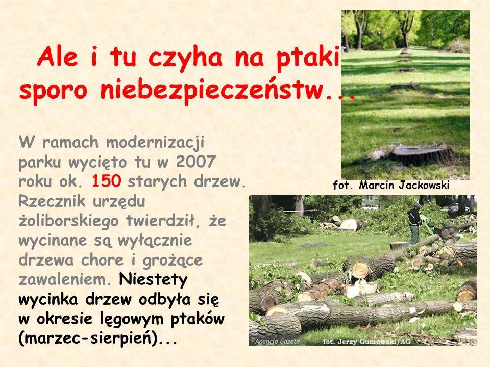 W ramach modernizacji parku wycięto tu w 2007 roku ok. 150 starych drzew. Rzecznik urzędu żoliborskiego twierdził, że wycinane są wyłącznie drzewa cho