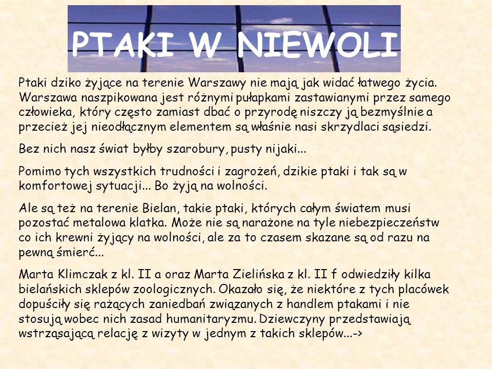 PTAKI W NIEWOLI Ptaki dziko żyjące na terenie Warszawy nie mają jak widać łatwego życia. Warszawa naszpikowana jest różnymi pułapkami zastawianymi prz