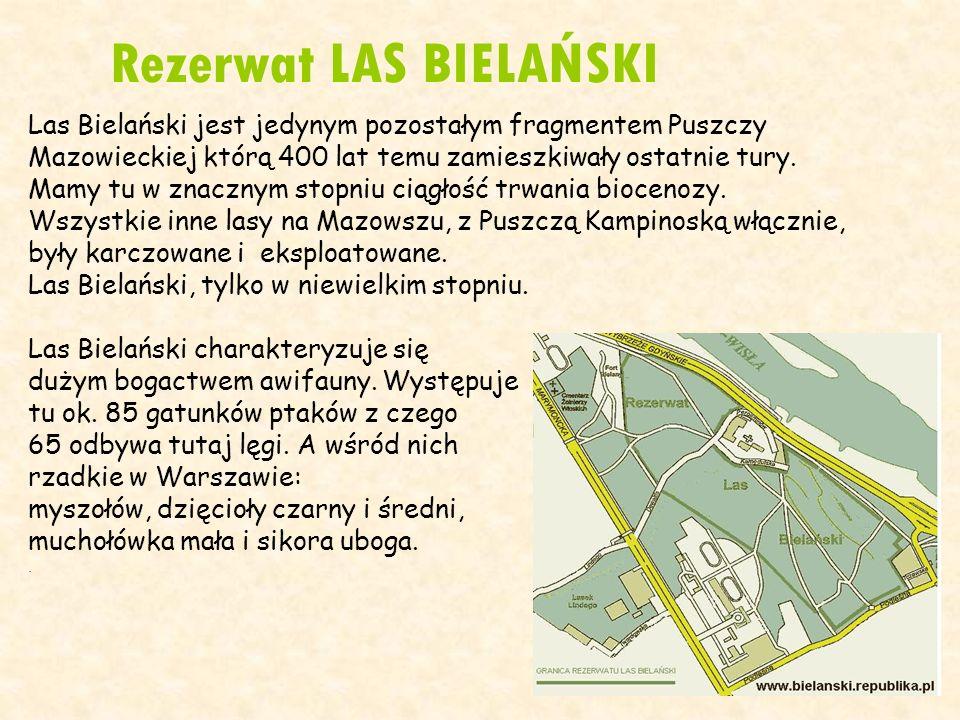 Rezerwat LAS BIELAŃSKI Las Bielański jest jedynym pozostałym fragmentem Puszczy Mazowieckiej którą 400 lat temu zamieszkiwały ostatnie tury. Mamy tu w