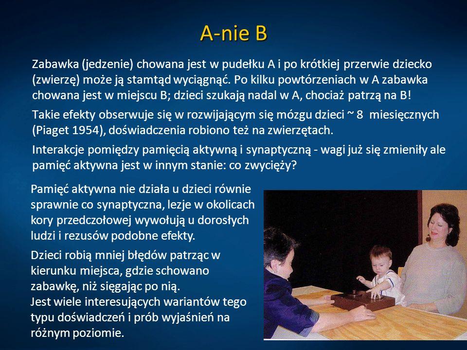 A-nie B Zabawka (jedzenie) chowana jest w pudełku A i po krótkiej przerwie dziecko (zwierzę) może ją stamtąd wyciągnąć. Po kilku powtórzeniach w A zab