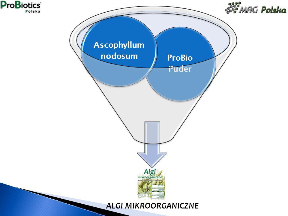 ALGI MIKROORGANICZNE ProBio Puder Ascophyllum nodosum