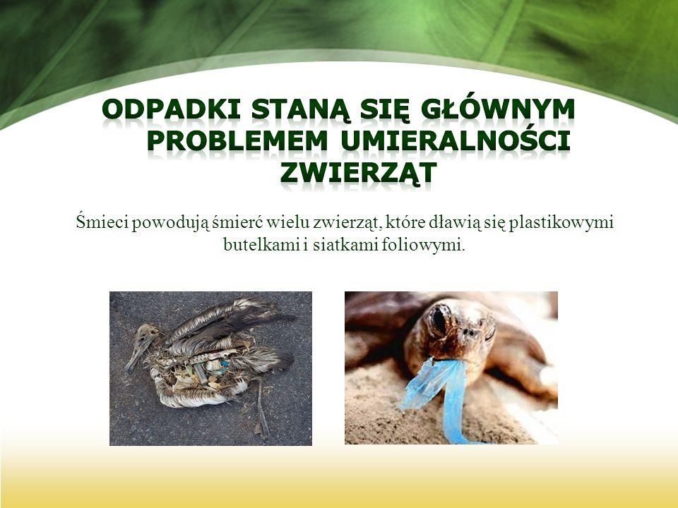 Śmieci powodują śmierć wielu zwierząt, które dławią się plastikowymi butelkami i siatkami foliowymi.