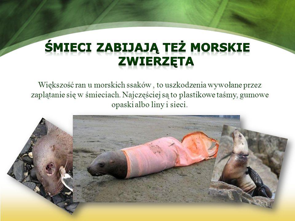 Większość ran u morskich ssaków, to uszkodzenia wywołane przez zaplątanie się w śmieciach. Najczęściej są to plastikowe taśmy, gumowe opaski albo liny